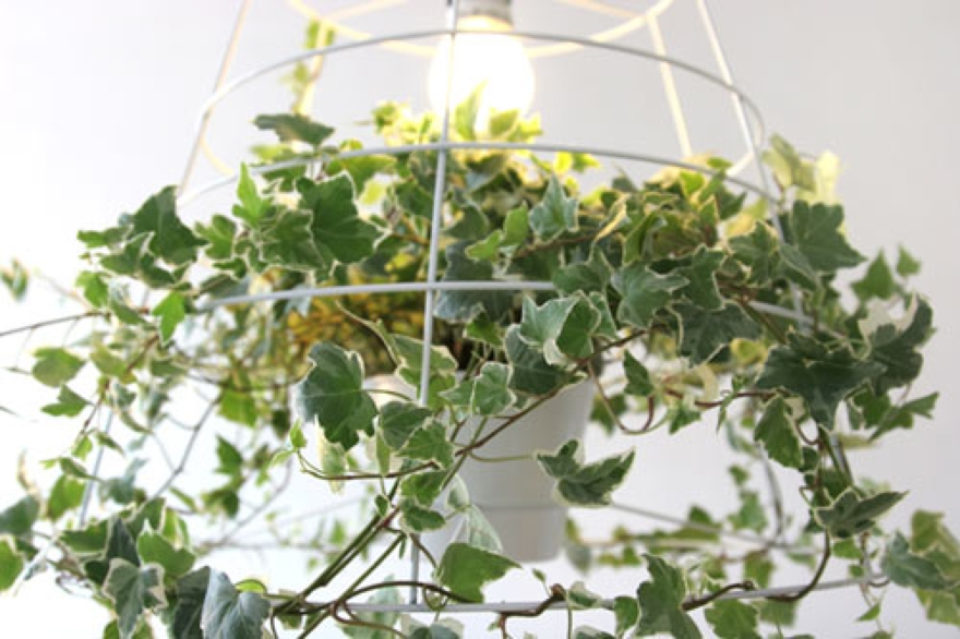 Photosynthesis lamp by Meirav Barzilay