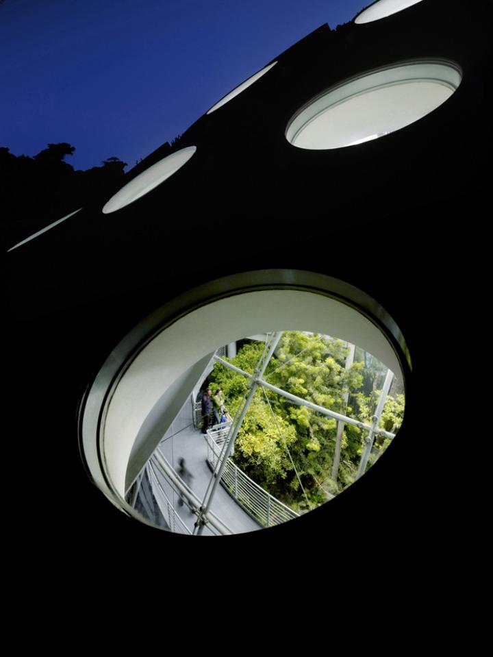 カリフォルニア·アカデミー·オブ·サイエンス - 緑 - 屋根11