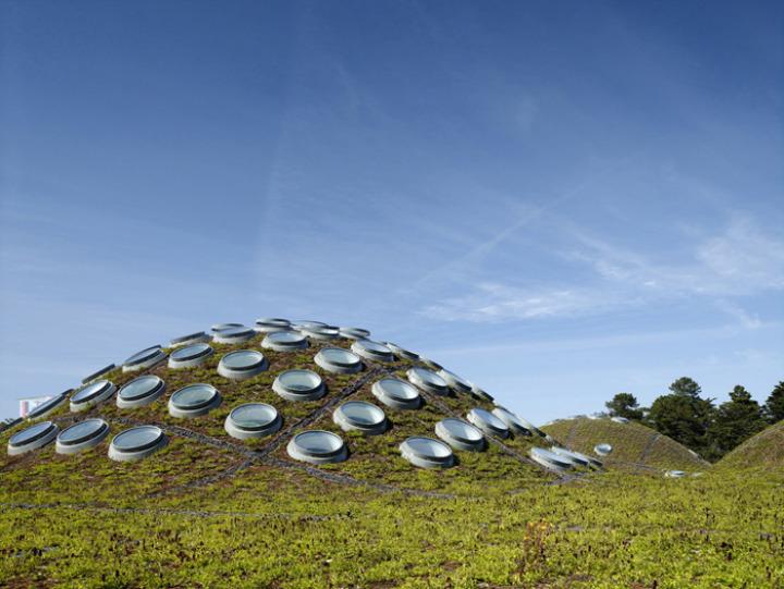 カリフォルニア·アカデミー·オブ·サイエンス - 緑 - 屋根2