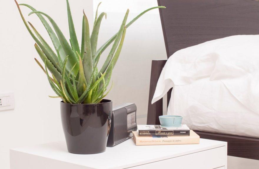 Aloe vera: la planta perfecta para cultivar en interior