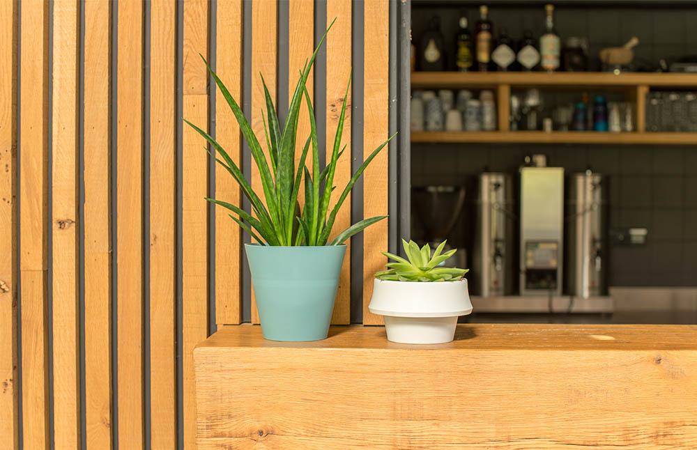 FOLD JOKJOR, el plantador que crece junto con la planta